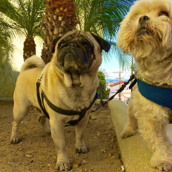 Миша и Джанни ведут гламурную жизнь - пальмы и океан...