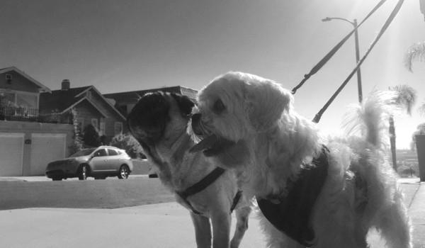собаки в городе
