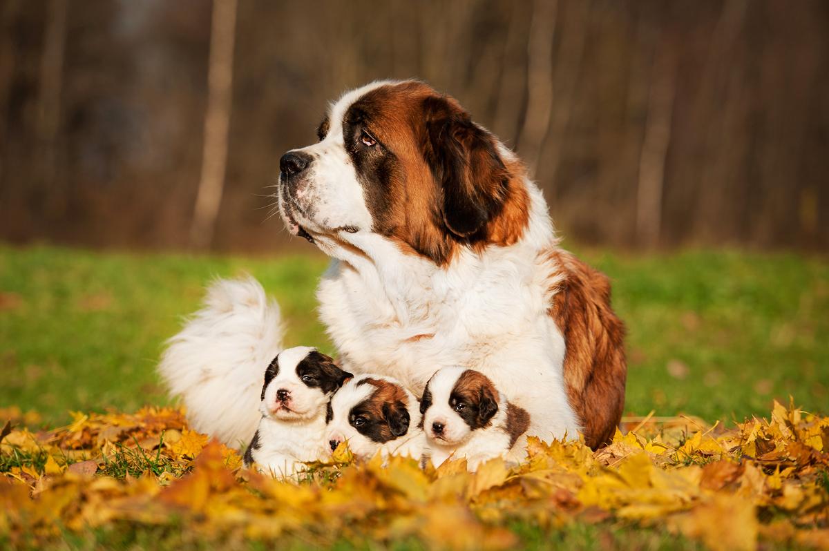 день домашних животных фото предпочел остаться